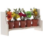 Miniature Potted Plants & Rack